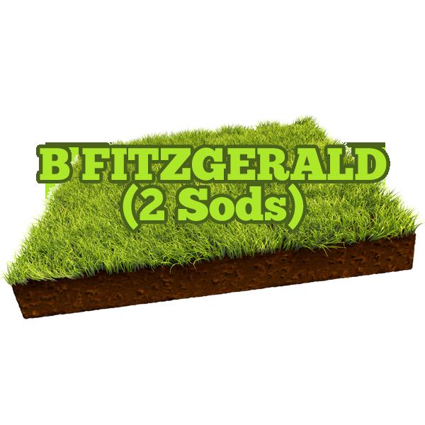 B Fitzgerald
