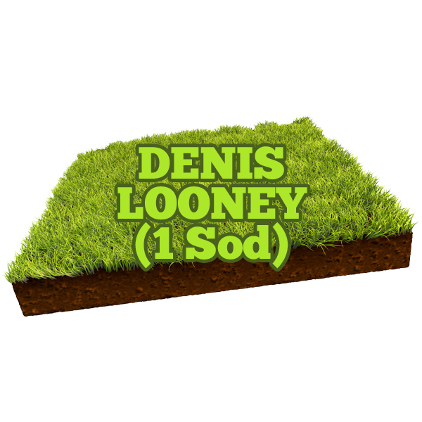 Denis Looney