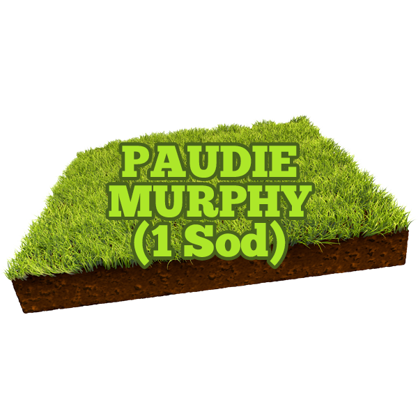 Paudie Murphy