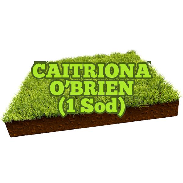 Caitriona O'Brien